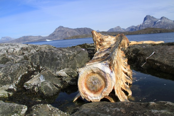 Greenland-blog-fourthcontinent-whale-bones-IMG_4361