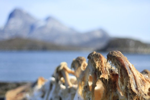 Greenland-blog-fourthcontinent-whale-bones-IMG_4362
