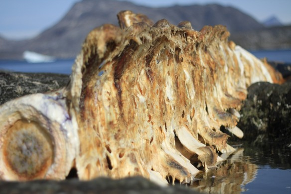 greenland-blog-fourthcontinent-whale-graveyard-IMG_4365