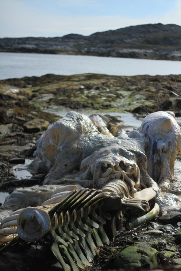 Greenland-blog-fourthcontinent-whale-skull-IMG_4367