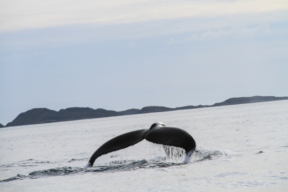 Thefourthcontinent-IMG_4757-whale