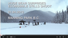 Polar bear visits advertising shoot
