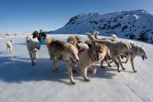 Dog sledding in Greenland. Source: Greenland Tours