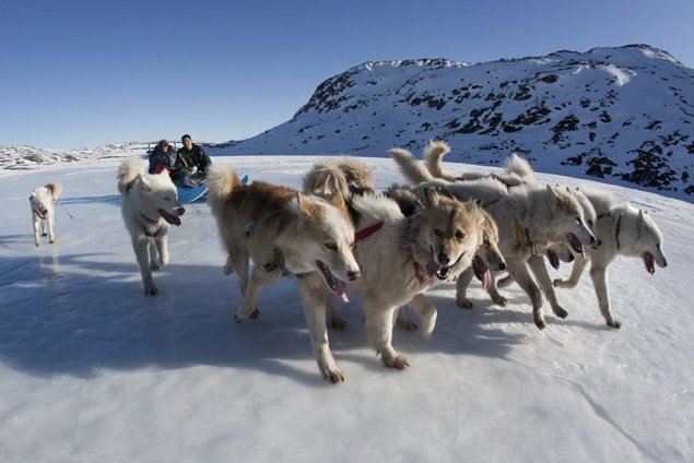 Dog sledding in Greenland. Source: