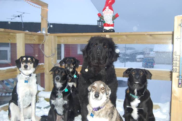 Six spellbound dogs at Amtoft family residence AKA dog vacation centre!