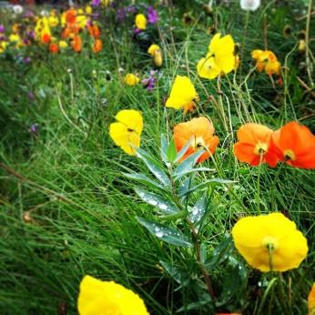 flowers greenland 2014-08-25_1409002448