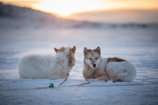 Dog sledding in Ilulissat.