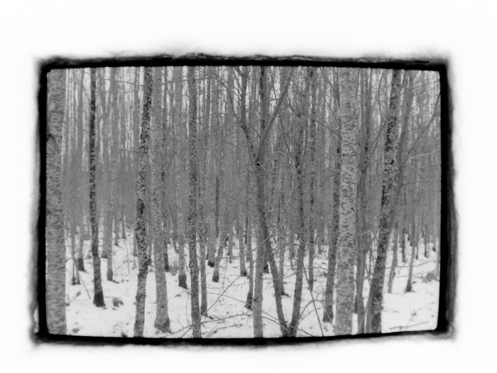 When trees become icebergs. Black and white analogue camera photo project. Photo:  Mia Lindenhann