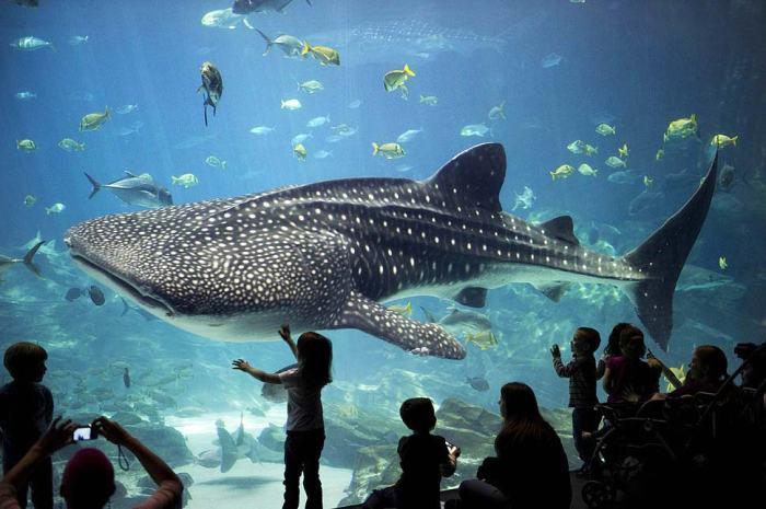 fishbowl-aquarium